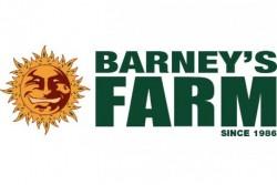 10 UND FEM - TANGELO RAPIDO (AUTO FLOWERING) * BARNEY'S FARM 10 UND FEM