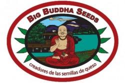 10 UND FEM - CHEESUS * BIG BUDDHA SEEDS 10 UND FEMINIZADAS