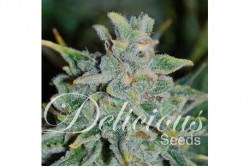 1 UND FEM - NORTHERN LIGHT BLUE AUTO (AUTOMATIC LINE) * DELICIOUS 1 UND FEMINIZADA