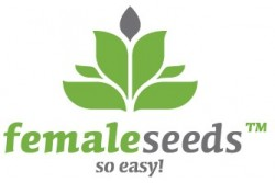 10 UND FEM - OUTDOOR MIX * FEMALE SEEDS 10 UND FEMINIZADAS