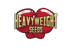 3 UND FEM - WIPEOUT EXPRESS AUTO * HEAVYWEIGHT SEEDS 3 UND FEMINIZADAS