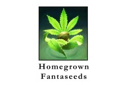 5 UND REG - WHITE WIDOW * HOMEGROWN FANTASEEDS 5 UND REG