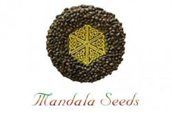 10 UND REG - KALICHAKRA  * MANDALA SEEDS 10 UND REGULARES
