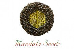 10 UND REG - BEYOND THE BRAIN * MANDALA SEEDS 10 UND REGULARES