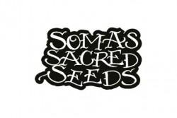 5 UND REG - RECLINING BUDDHA  * SOMA SEEDS REGULAR 5 UND