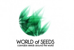 3 UND FEM - SPACE (LEGEND COLLECTION) * WORLD OF SEEDS 3 UND FEMINIZADAS
