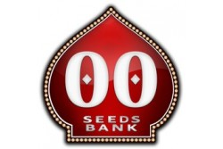 6 UND FEM - FEMINIZED COLLECTION 1 * 00SEEDS 6 UND FEMINIZADAS
