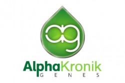 5 UND REG - EISBAER * ALPHAKRONIK SEEDS 5 UND REGULARES