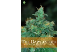 5 UND REG - THE DAWGFATHER * ALPHAKRONIK SEEDS 5 UND REGULARES